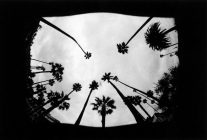 Avalon; California, 2015