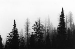 Cedar Trees; Utah, 2015